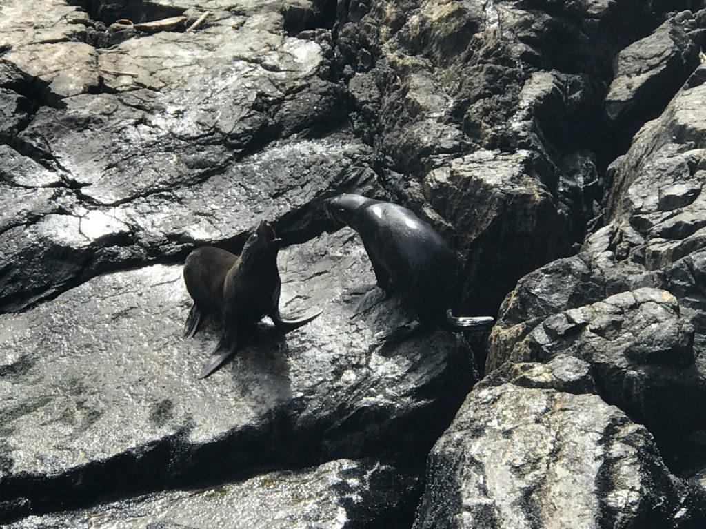 Seals 02